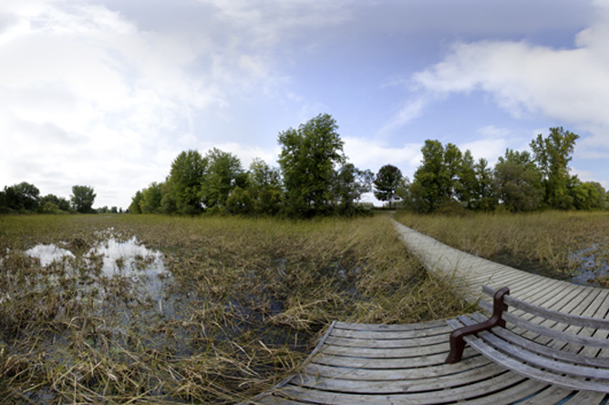 Panoramic photograph of a dock floating in an aquatic plant community