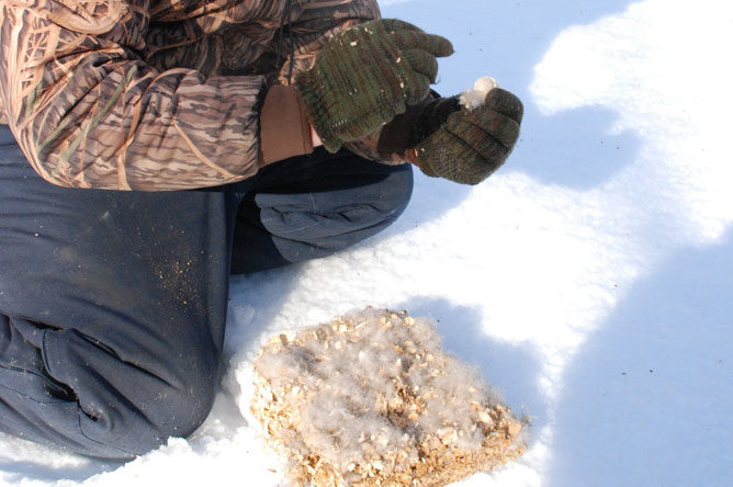 A man, crouching in the snow, examines a Wood Duck nesting box.