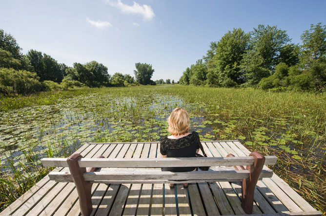 Woman seated on a bench set up on a dock floating in an aquatic plant community