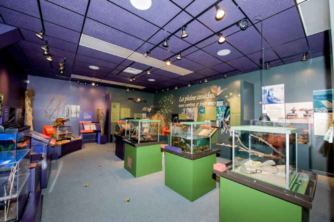 Displays, models and mounted animals in the permanent exhibit of the Centre d'interprétation de Baie-du-Febvre